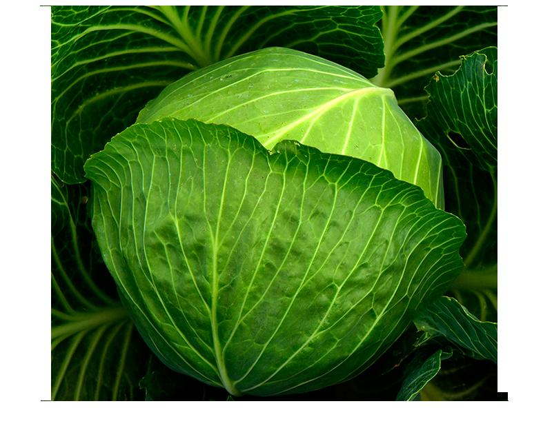 cavolo sop 800×650